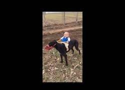 Enlace a Bebé montando un perro