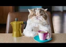 Enlace a Cuando te cambias el café