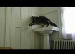 Enlace a Cuando los gatos aprenden a hacer cosas es hora de correr