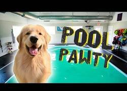 Enlace a Fiesta canina en la piscina