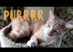 Enlace a Este gato ronronea como un monstruo de Sci-Fi