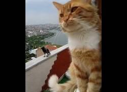 Enlace a Gato y cuervo conversan