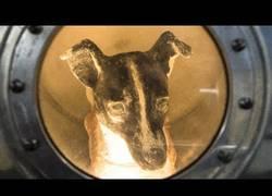 Enlace a ¿Qué ocurrió con Laika en el espacio?