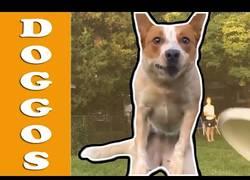 Enlace a Momentazos que nos regalan algunos perros