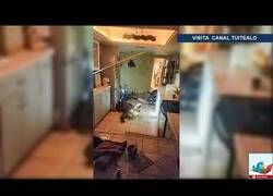 Enlace a Un caimán enorme irrumpe de madrugada en una casa de Florida