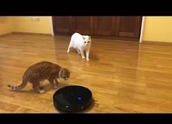 Enlace a Estos dos gaticos han encontrado a un enemigo en común