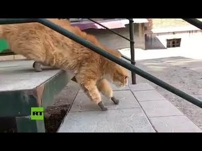 Gatito vuelve a andar gracias a unas protesis de titanio