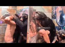 Enlace a Monos bañan a un hombre con larga cabellera en la ducha