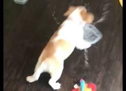 Enlace a Mi perro ha olvidado cómo beber agua