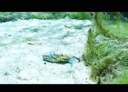 Enlace a Cangrejo saluda amistosamente a una submarinista