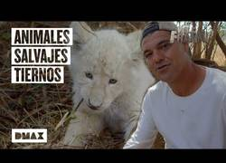 Enlace a Estos son algunos de los encuentros más entrañables de Wild Frank con animales salvajes