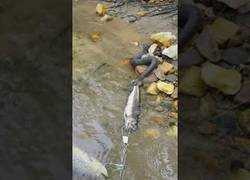 Enlace a Esta serpiente se pelea con un pescador por su presa