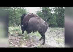 Enlace a Los peligros de acercarse demasiado a un animal salvaje