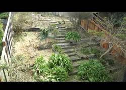 Enlace a Cabras se meriendan un jardín entero en 6 días