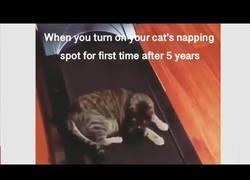Enlace a Cuando enciendes el sitio favorito de tu gato después de 5 años