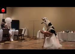 Enlace a Una entrenadora canina sorprende a los invitados de su boda con este baile