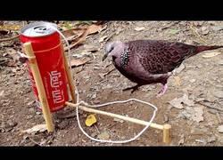 Enlace a Trampa para pájaros creada con una lata