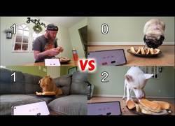 Enlace a Concurso de comer perritos calientes, hombre vs perros
