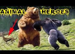 Enlace a Animales rescatando y salvando a otros animales