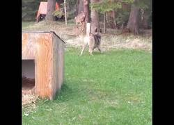 Enlace a ¿Qué fue de Bambi? Estaba de parranda