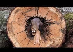 Enlace a Lo último que te esperarías encontrar dentro de una árbol
