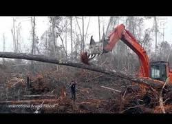 Enlace a Orangutan intenta parar un bulldozer que estaba destruyendo su hábitat