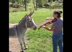 Enlace a Dueto de una violinista y su burro