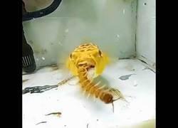 Enlace a El pez globo se come todas tus pesadillas
