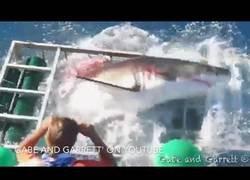Enlace a ¿Qué pasa cuando un tiburón blanco se cuela en la celda del submarinista?