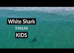Enlace a El vídeo que demuestra que los tiburones no son unos asesinos sin sentido
