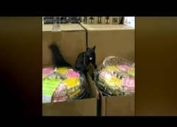 Enlace a Ardilla ataca a una mujer que la grababa mientras robaba comida en un supermercado