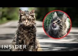 Enlace a Cómo entrenan a los gatos para la televisión y el cine [ENG]
