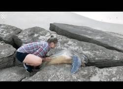 Enlace a Esta pareja salva a una tortuga atrapada entre dos grandes rocas a la orilla del mar