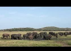 Enlace a Elefantes asiáticos se aplican protector solar