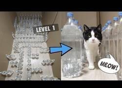 Enlace a Construyendo laberintos para gatos