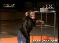 Enlace a Un mono poniendo a prueba un circuito de 'ninja warrior'