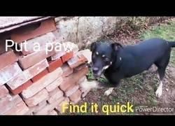 Enlace a Esconde una bolsita de té para poner a prueba el olfato de su perro