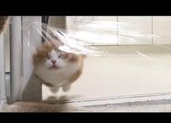 Enlace a Cómo trollear a tus gatos