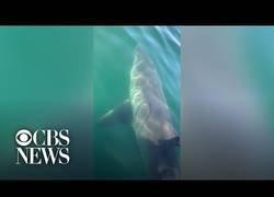 Enlace a Salir a pasar un rato en familia y que se te acople un tiburón de 5 metros