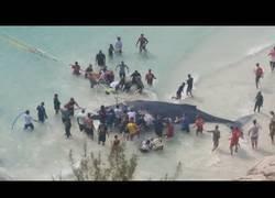 Enlace a Rescate de una ballena varada en una playa de Brasil