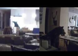 Enlace a Un oso entra en una casa, abre la nevera y se da un banquete en el salón