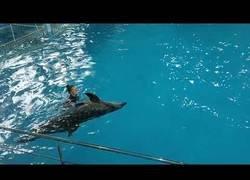 Enlace a Los delfines son una maravilla del mundo