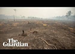 Enlace a Vistas desde un dron sobre el amazonas después de la tragedia