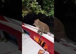 Enlace a No te puedes fiar de los monos