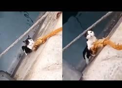 Enlace a Un gatito se queda atrapado y lo rescatan con la ayuda de una simple cuerda