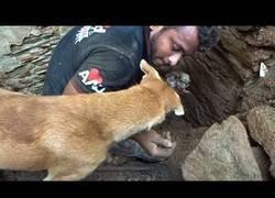 Enlace a Rescate de unos cachorros enterrados por un desplome
