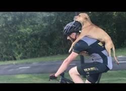 Enlace a El ciclista encuentra un perro herido. Lo que sucede después deja a todos boquiabiertos