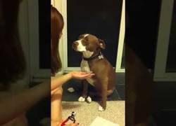 Enlace a Este perro merece llamarse DRAMA