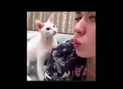 Enlace a Este gato sí que sabe