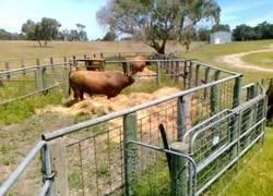 Enlace a Y esto es un toro teniendo una pataleta